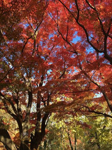 【京都の紅葉を満喫してきました】京都府立植物園